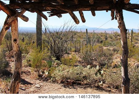 Sonoran desert view framed by wooden shelter