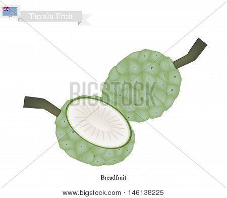 Tuvalu Fruit Unripe Screw Pine Pandanus Tectorius or Pandanus Odoratissimus. The Native Fruit in Tuvalu.