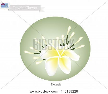 Tuvalu Flower Illustration of Plumeria Frangipanis Flowers. One of The Most Popular Flower in Tuvalu .