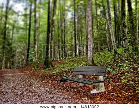 Bench along forest footpath