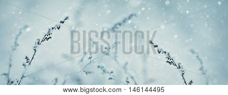 Winter nature background. Winter landscape. Winter scene. Frozen flower Banner