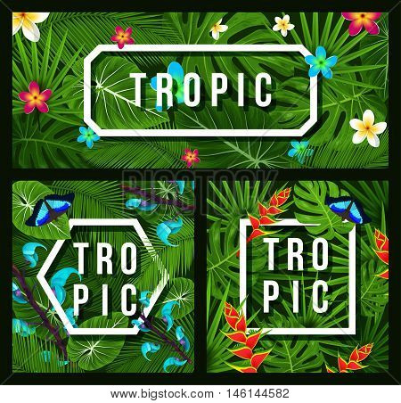 Three modern tropical background jungle leaves plumeria tropical flowers. Butterfly. Trendy background. Vector illustration