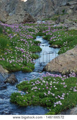 Doğa ,su  ve çiçek bahardan yaza geçiş