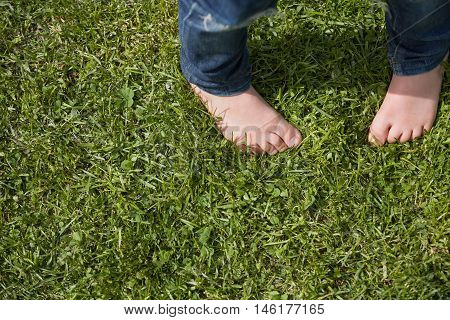 Top view on kid's bare feet on the green grass. Little boy standing on the grass in the park on a sunny day. Child's bare feet.