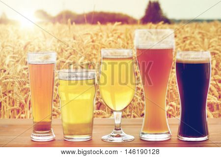 brewery, drinks and alcohol concept - close up of different beers in glasses on table over cereal field background