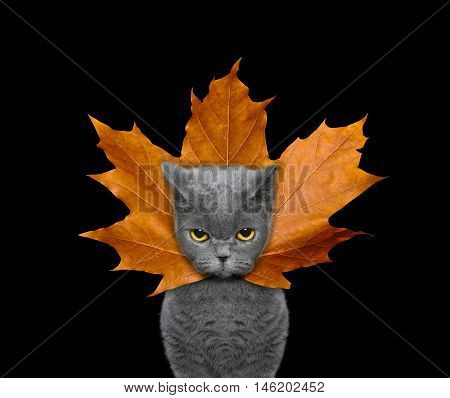 Cute cat with a leaf instead hat on the head -- isolated on black