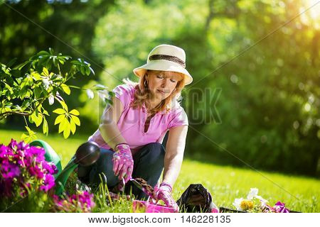 Gardener taking care of her plants in a garden.She is enjoying spending time in her garden at home.