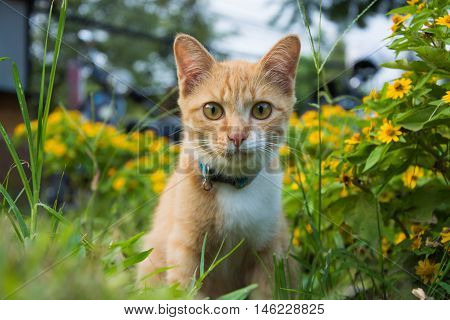 A cute cat sits in between flowers in the garden