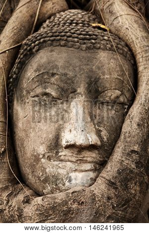 Buddha figure overgrown by fig roots in Wat Mahatat in Ayutthaya historic park Thailand.