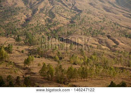 The dry grass landscape on Flores island, Indonesia.