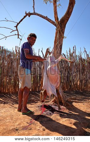 The Traditional slaughtering of a goat in Brazil