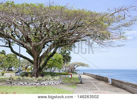 Tropical walkway along the shore in Suva the capital of Fiji.