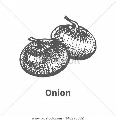 Vector illustration doodle black and white hand-drawn onion. Isolated on white background. The concept of harvesting. Vintage style.