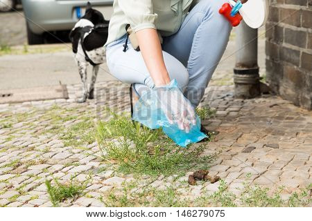 Close-up Of Female Hand Picking Up Dog Feces With Plastic Bag