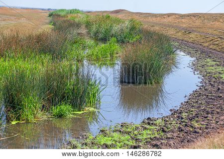 swamp with green reed and dirty water
