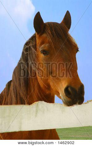 Horse Cribbing
