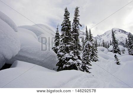 Glacier National Park, Canada. Winter Landscape.