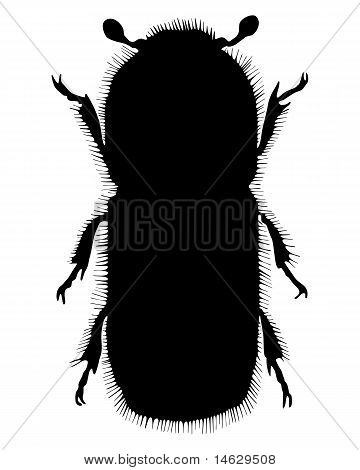 Detailed and colorful illustration of bark-beetle silhouette poster