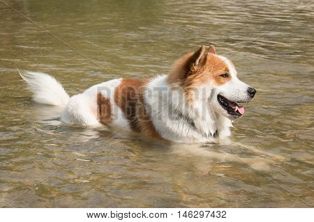 Cute Dog lying and bath in water