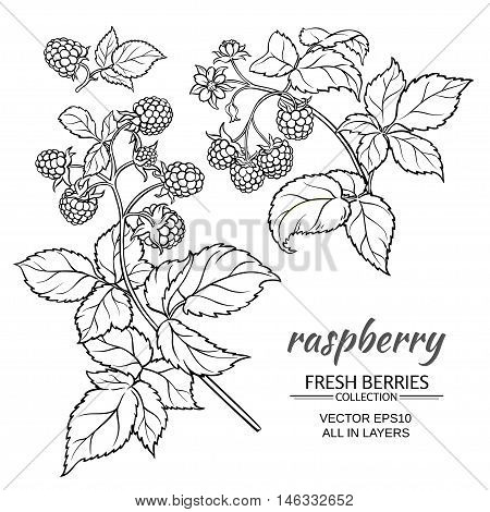 raspberry branch vector set on whte background