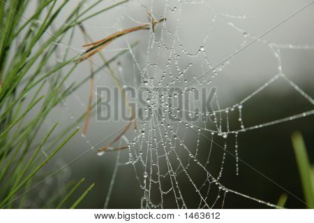 Water Drops On The Web