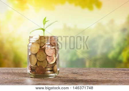 Plant growing in savings coins in sunny afternoon. Plant growing from coins in a jar. Plant growing from jar full of coins on wooden table with copy space. Business growth and investment concept.