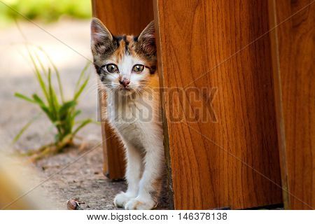 Little stray cat tricolor anxious looks around the street