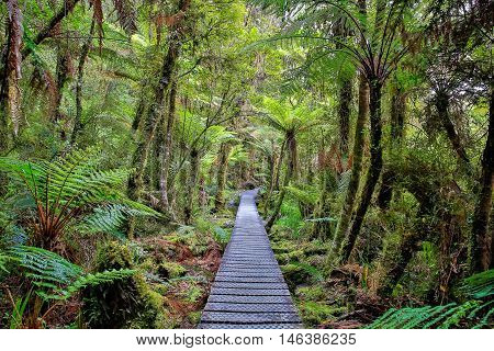 Wooden Walkway In The Rain Forest. New Zealand