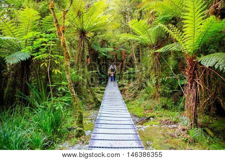 Father With Little Daughter Walking In The Rain Forest. New Zealand