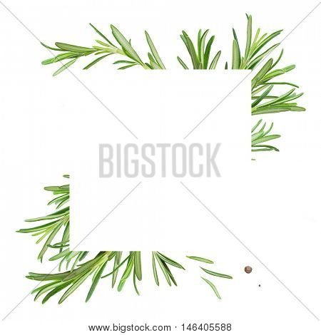 Frame with fresh rosemary isolated on a white background
