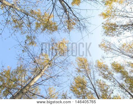 tress look up and sky autumn background
