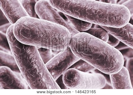 Bacterial infection. Rod-shaped bacteria, close-up view. 3D illustration