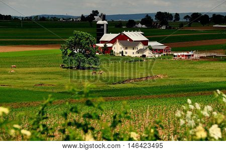 Ronks Pennsylvania - June 6 2015: A pristine Amish farm with grazing horses in its pastures laundry drying on clotheslines and family home, barns, and silos