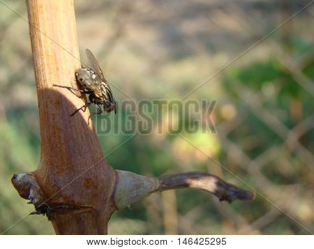 Flies are insects included in the order Diptera