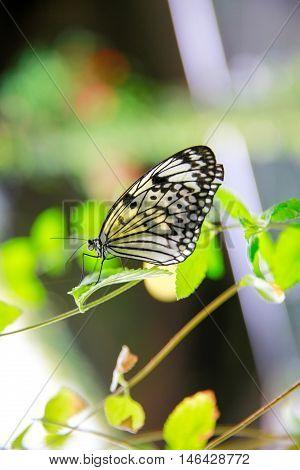 Dunedin, New Zealand - Febr 10, 2015: Butterfly Sitting On Green Leaf. Larnach Castle Garden,