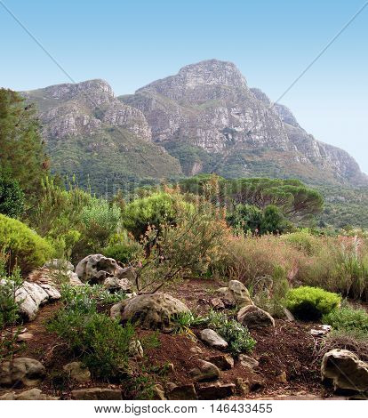 This Is Kirstenbosch Botanical gardens, Cape Town South Africa 03a poster