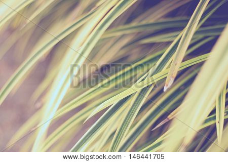 Leaves Yellowish Green Close Up Background, Plant Background