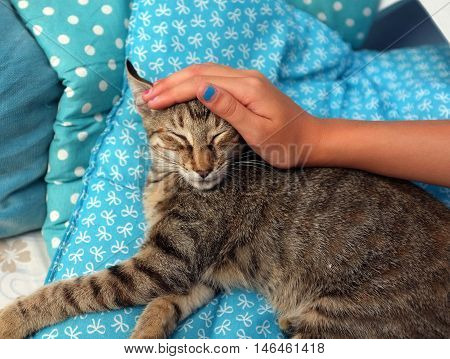 Girl hand with blue fingernail polish is petting a kitten