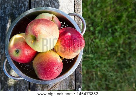 Ripe Apples In Basket On Rustic Table. Red Autumn Apples