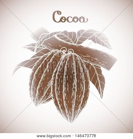 Graphic cocoa fruits on the branch isolated on white background. Hand drawn exotic cacao plant in brawn colors