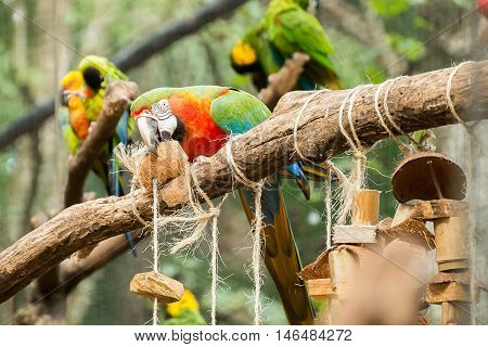 Colorful Of Blue And Gold Macaw Aviary
