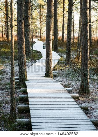 Tourist Hiking Trail In Woods In Winter