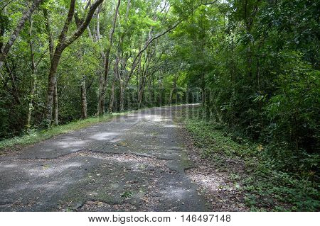 roadway in nature forest at Chonburi , Thailand