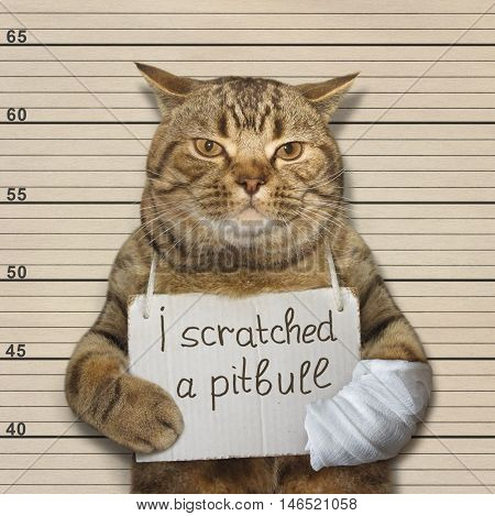 A brave cat has scratched a pitbull. It was arrested.