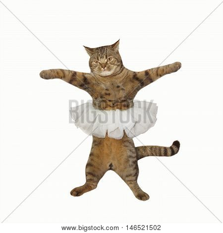 A cat looks like a prima ballet dancer. It's wearing a skirt. The white background.