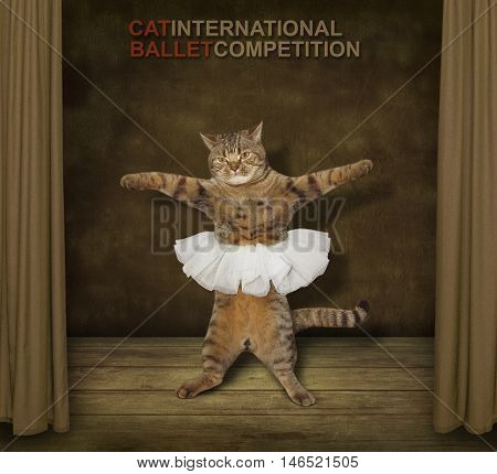 A cat looks like a prima ballet dancer. It's wearing a skirt and dancing on a theater stage.