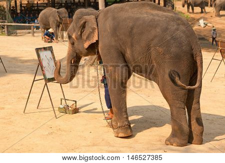 Chian Mai Thailand - March 07 2011 - Elephant drawing a painting in Maesa camp