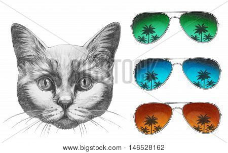 Original drawing of Cat with mirror sunglasses. Isolated on white background.