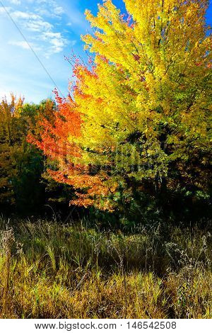 Colorful, vivid, Wisconsin hardwood trees in autumn.