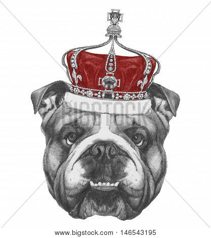 Original drawing of English Bulldog  with crown. Isolated on white background